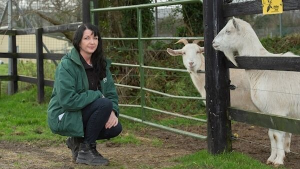 Marie O'Connor, sanctuary manager with two of the recently aquired goats at the Limerick Animal Welfare Sanctuary at Moorestown, Kilfinane, Limerick. Picture: Dan Linehan