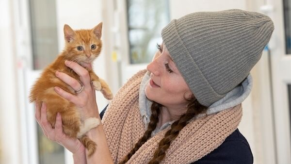Avril Foley cares for a kitten in the Cattery at the Limerick Animal Welfare sanctuary at Moorestown, Kilfinane. Picture: Dan Linehan