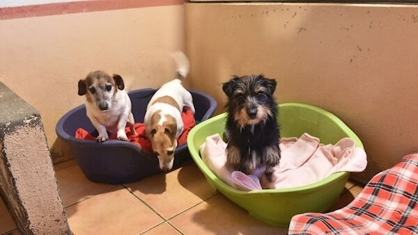 Joey, Josie and Bobby at West Cork Animals, Gortagrenane, Clonakilty, Co Cork. Picture: Dan Linehan
