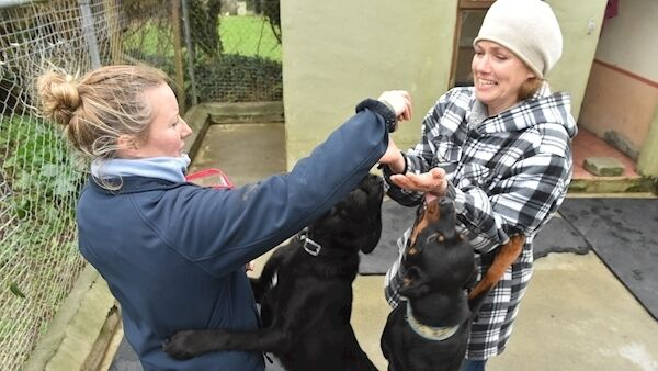 Jennifer Headlam and Katie Burgess of the West Cork Animal Welfare Group playing with Maggie and Phoebe at West Cork Animals, Gortagrenane, Clonakilty, Co Cork. Picture: Dan Linehan