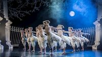 Changing their feathers: Male lead Swan Lake went from controversial to iconic