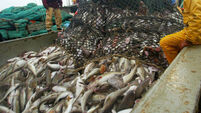 Fishing industry slump demonstrates vulnerability of food security in virus crisis