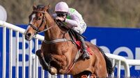 Veteran Faugheen can upstage young guns