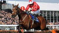 International Hurdle could be The New One's swansong