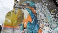 Stunning kingfisher mural unveiled in Cork city