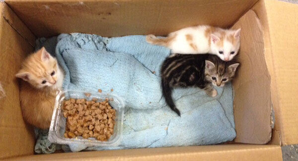 File photo of rescued kittens.