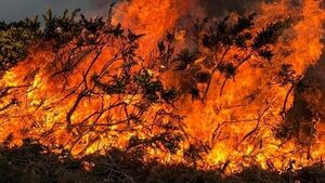Man arrested in connection with Donegal gorse fires