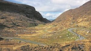 Gardaí renew appeal for witnesses to fatal collision in Co Kerry