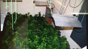 Man arrested as gardaí recover €150,000 worth of cannabis in Co Louth