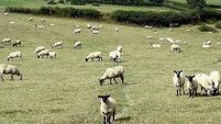 Woman found guilty of allowing sheep to wander has case dismissed