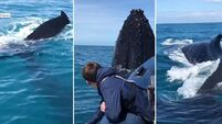 'We were shaking, in awe': Father and son recount close encounter with humpback whales in Kerry