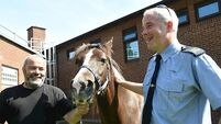 Watch: Stolen therapy pony reunited with owner after public appeal