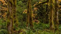 Call to blacklist Sitka spruce forests as invasive species