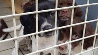 19 dogs rescued from Co Meath property by ISPCA
