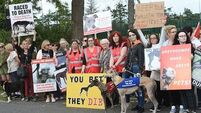 Half of Irish Greyhound Board sponsorship for 'care fund'
