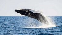 Deep sea whale watching provides some poetry in motion