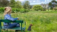 Peter Dowdall previews the Rare and Special Plant Fair at Glin Castle