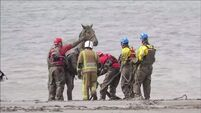 Watch: Coastguard carry out painstaking rescue of horse stuck in deep mud on beach