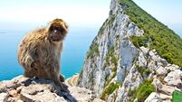 Mystery of Barbary ape at Eamhain Mhacha