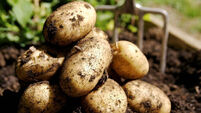 Bord Bia hoping to make spuds more a-peel-ing to millennials by making them 'Insta-friendly'