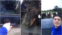 Watch: Dog locks owner out of car in Kerry