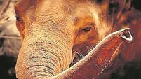 Elephant alert: Power of petitioning
