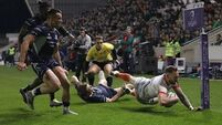 Shark attack sinks Connacht