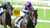 Ballydoyle arsenal looks primed to conquer Royal Ascot again
