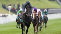 Aidan O'Brien willing to wager Sir Dragonet is Epsom bound