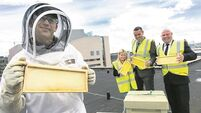 New tenants create a buzz