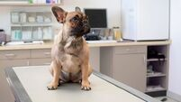 Paws for thought: High cost of caring for designer dogs