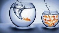 Generation goldfish: Our online lives are having a detrimental impact on our attention spans
