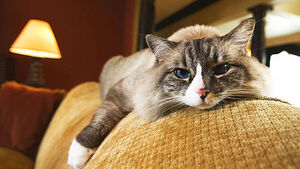 Happy birthday…world's oldest cat
