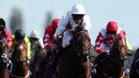 Surprise 50-1 shot Code Of Honour takes Maiden Stakes at Newbury