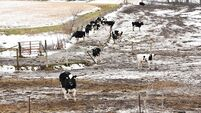 Give livestock a fighting chance not to get sick