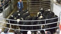 Marts holding ground in spite of factory slippage
