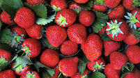 Consumers excited for start of Strawberry season