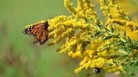 Pollinator insect count on the way for farms
