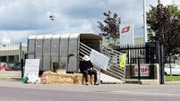 Beef protest shows Irish farming only a two-trick pony