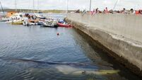 A 'logistical nightmare' to remove stranded whale's body