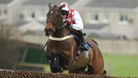 Flemenstar 'very unlikely' for Cheltenham