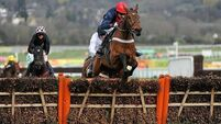 CHELTENHAM 2013: Bobs worth backing in high-class renewal of Gold Cup