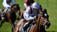 How will you Approach 2000 Guineas favourite?