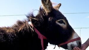 Council approves donkey sanctuary on ancient site