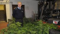 Two held after grow-house raid