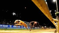 Greyhound industry to be reviewed