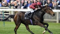 Hills: Curragh mile just ideal for Judge