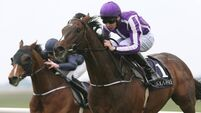 Camelot in frame for Breeders' Cup