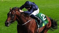 War to bow out after Breeders'