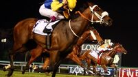 South African star Shea can right the wrong of Ascot defeat